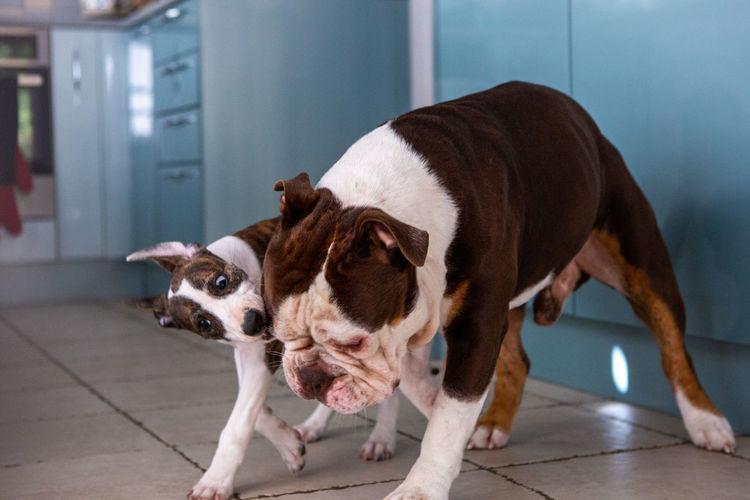 Dog standing on tiled floor