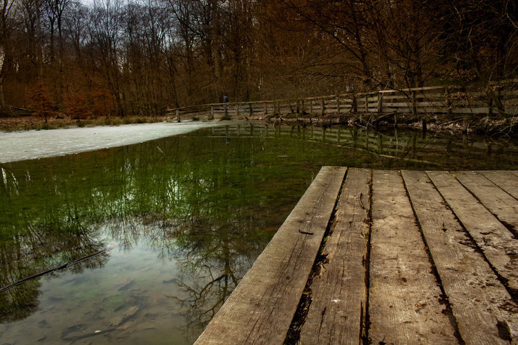 Water Tree Wood - Material Lake Nature Plant No People Tranquility Reflection Forest Tranquil Scene Land Wood Beauty In Nature Scenics - Nature Bare Tree Outdoors Non-urban Scene Footbridge Vosswinkel Sascha Barczyk Autumn Autumn Mood EyeEmNewHere