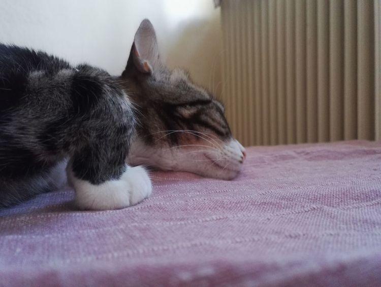 Taking Photos Home Interior Feline Whisker Tabby Kitten Tabby Cat Cat At Home