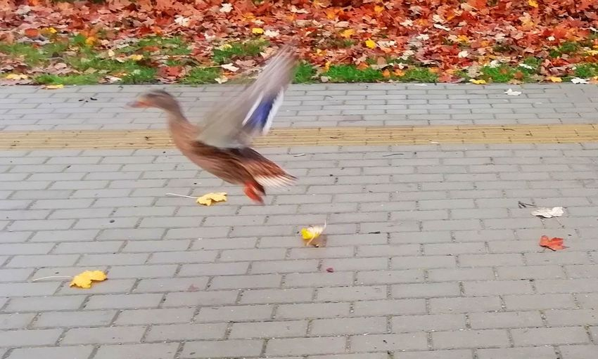 High angle view of bird flying over footpath