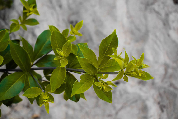 High angle view of fresh green leaves against wall