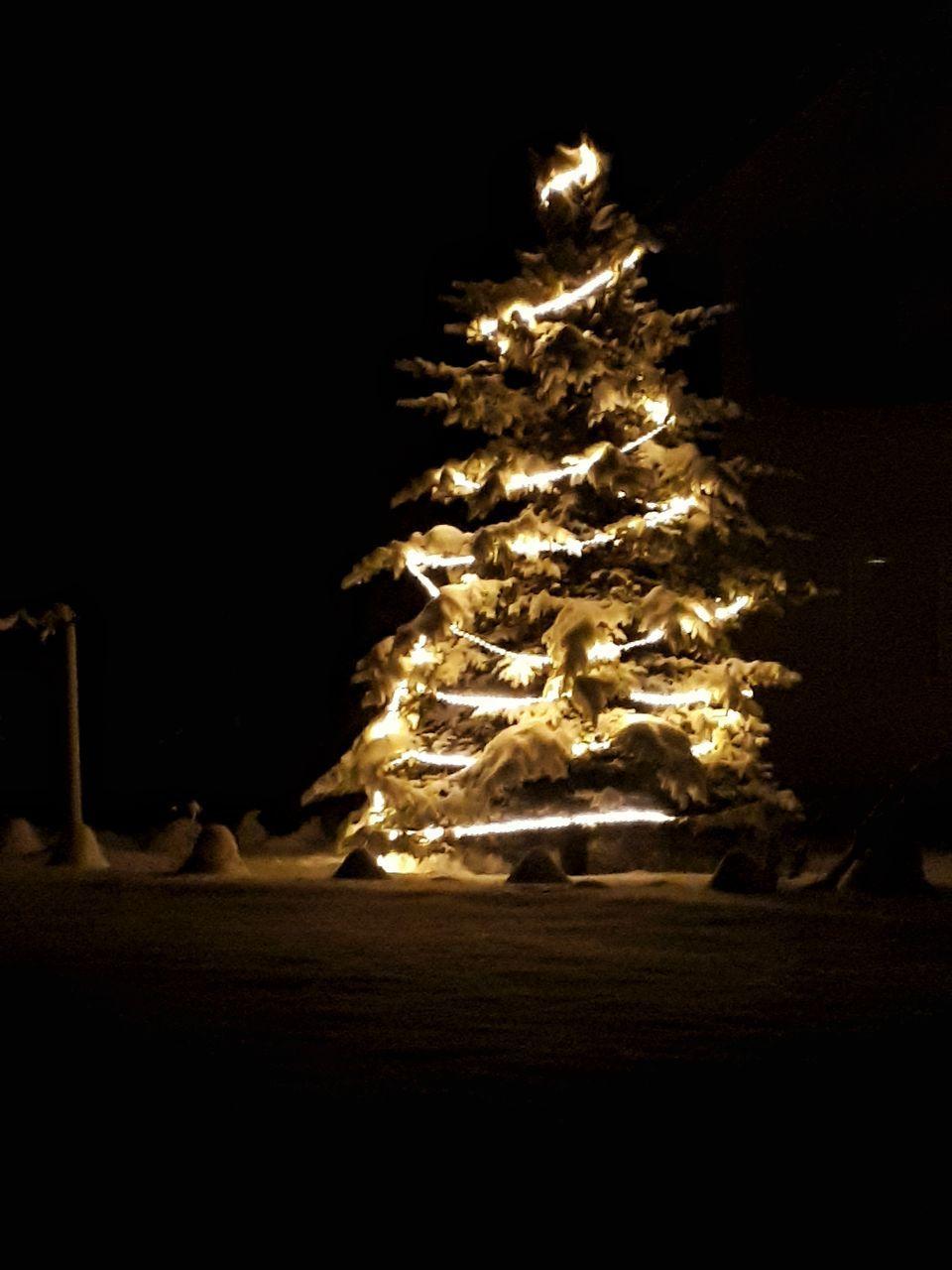 ILLUMINATED CHRISTMAS TREE IN NIGHT