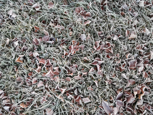 """""""winter leaves"""" Abundance Animal Themes Background Backgrounds Close-up Day Frost Full Frame Grass Grassy Leave Leaves Leaves Only Leaves Leavesporn Light Morning Nature Nature Nature_collection No People Outdoors Pattern Surface Texture Winter"""
