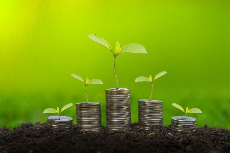 Beauty In Nature Beginnings Container Copy Space Finance Gardening Green Color Growth Large Group Of Objects Leaf Metal Money Thailand Money Around The World Nature New Life No People Outdoors Plant Plant Part Sapling Seedling Wealth