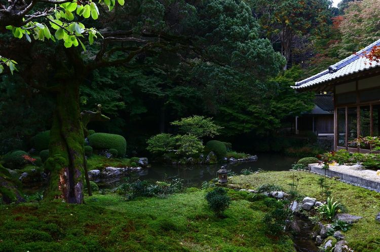 Japan Nature Nature_collection EyeEm Nature Lover Japantemple