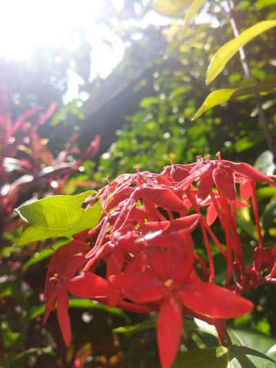 Leaf Nature Red Plant No People Day Outdoors Beauty In Nature Close-up Fragility Freshness